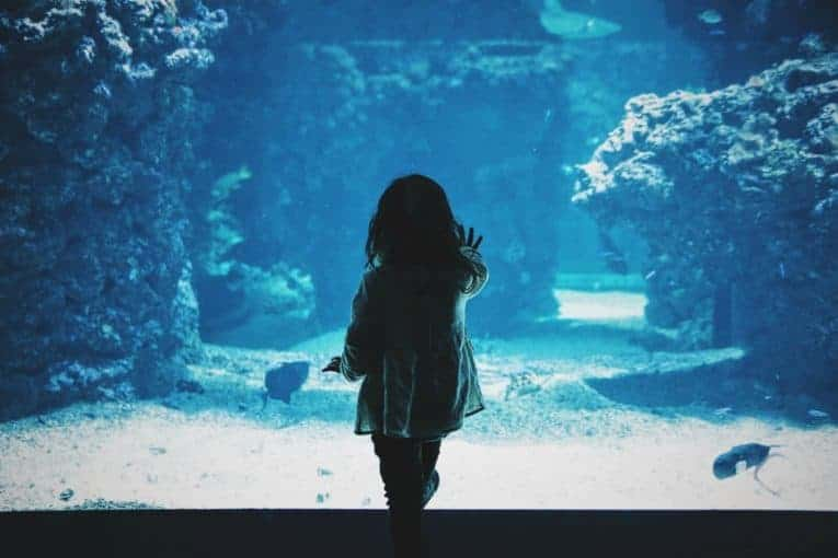 aquarium with kids